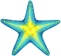 Blue_Starfish_PNG_Clip_Art-1718